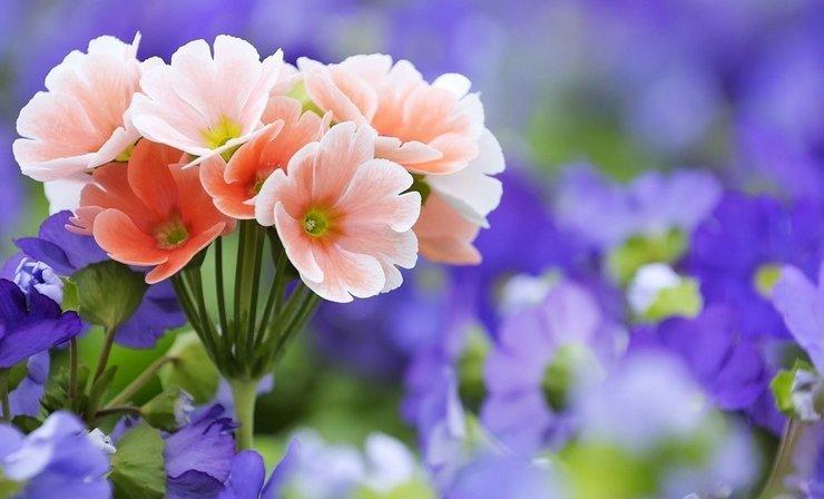 Розовые и фиолетовые полевые цветы