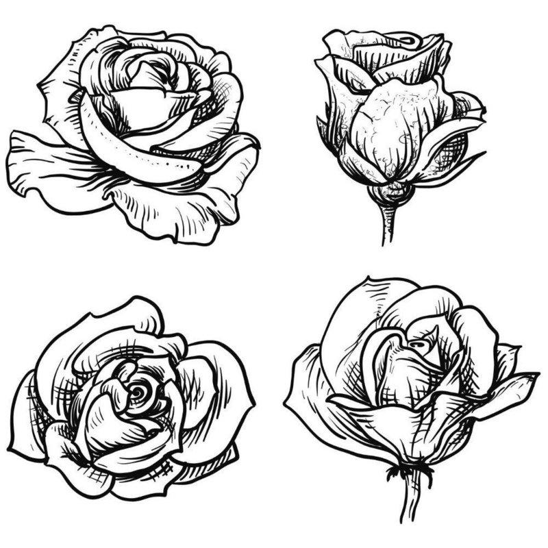 4 красивые розы эскиз для тату