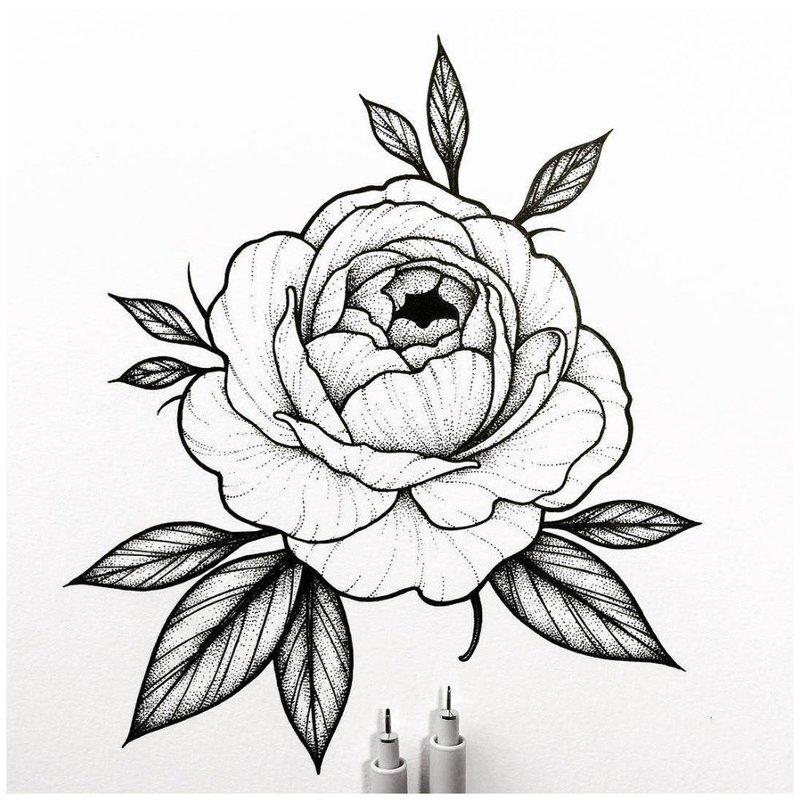 Красивый эскиз розы для тату