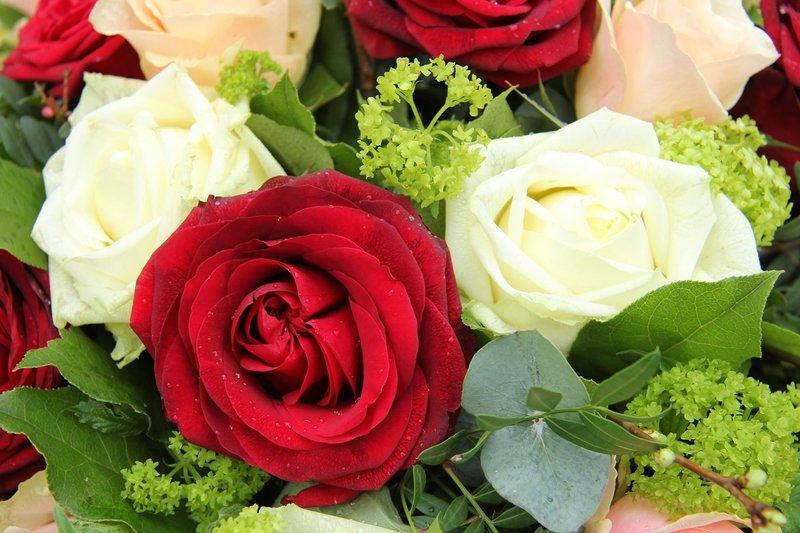 Белые и красные розы