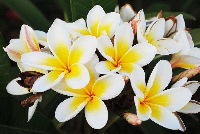 Бело-желтые цветы