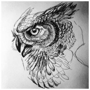 Эскиз головы совы