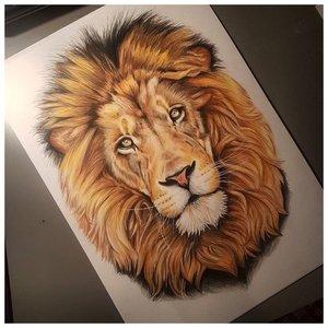 Эскиз цветной тату льва