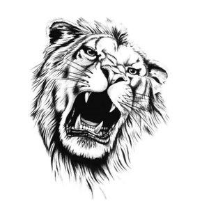 Эскиз тату льва в злости