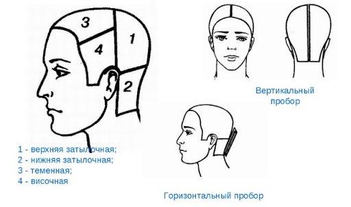 Деление головы на зоны: схема